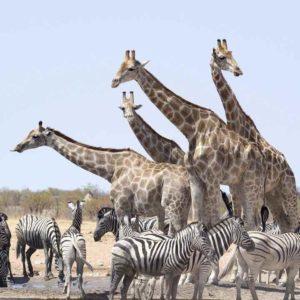 Read more about the article La Namibie, Une Destination Emblématique Du Continent Africain