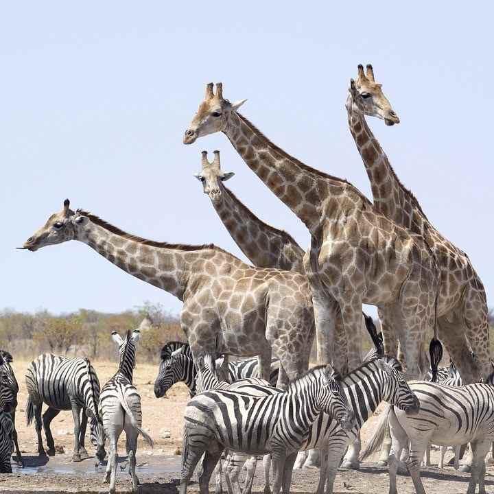 La Namibie, Une Destination Emblématique Du Continent Africain