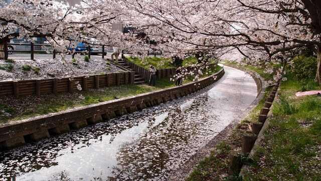Meguro River, district d'Ebisu meilleur moment pour visiter début avril
