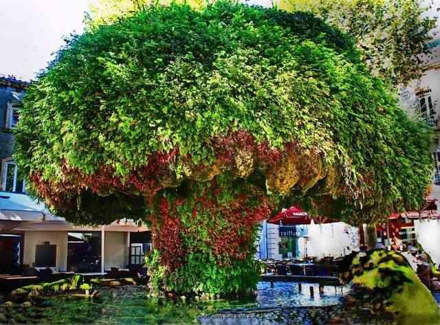 la fontaine moussue salon de provence